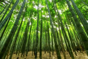 The Benefits of Using Bamboo in PICCsox®